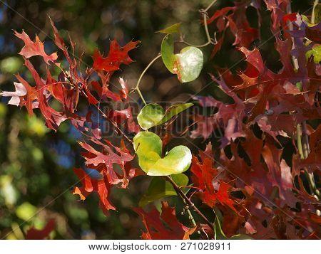 A Autumn Arrangement By Nature Provides Florist And Landscape Designers New Ideas.