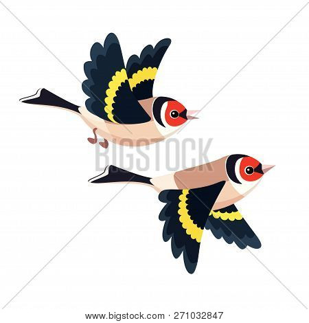 Vector Illustration Of Cartoon Flying European Goldfinch Pair Isolated On White Background