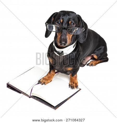 d09c36b2da6e Dachshund Dog In Glasses Images
