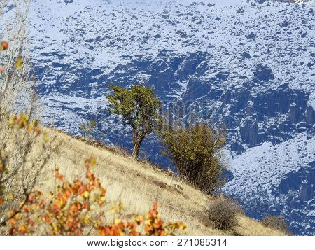 Tree And Bush, Autumn, Wimter, Iran, Good Friends