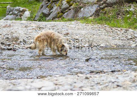 Dog In A Park Along A River, Bichon Havanais Breed