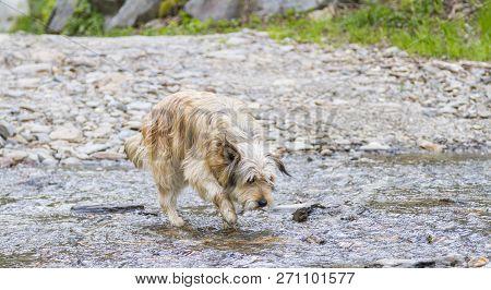 Tender Dog Outdoor In A Park Along A River, Bichon Havanais Breed