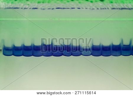 Close-up of an electrophoresis for protein separation. Observed lanes with blue color of loading buffer. Abstract vision of a scientific research technique. poster