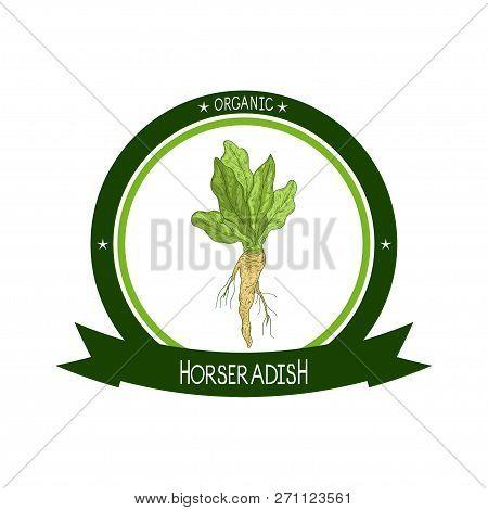 Horseradish. Sketch. Root, Leaves. Color Pattern. Logo, Emblem, Sticker