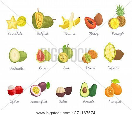Lychee And Carambola Set With Names And Tropical Fruits Vector. Pineapple And Cupuacu, Bael And Mame