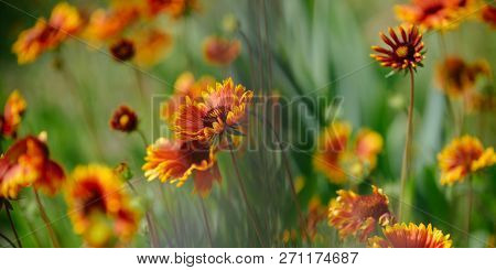 An Embroidery Of Wild Flowers. Blossoming Flowers On Nature Landscape. Wild Flowers On Summer Field.
