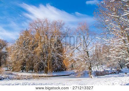 Scenic view of the winter park ay sunny day poster
