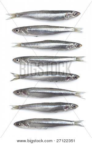 Whole fresh raw European anchovy on white background