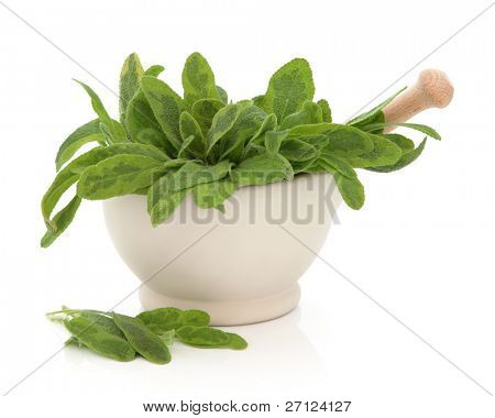 Variegated sage herb leaf sprigs in a cream stone mortar with pestle and scattered leaves isolated over white background. Saliva.
