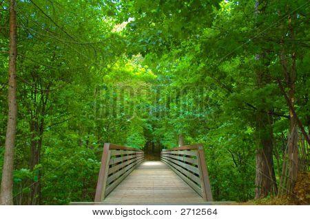 Rustic Bridge In The Woods