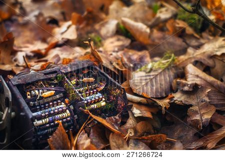 Old Tv Tuner Channel Selector With Moss In Autumn Leaves