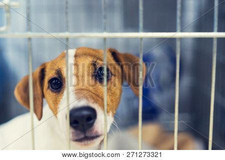 Sad Dog Behind The Fence. Homeless Dog Behind Bars In An Animal Shelter