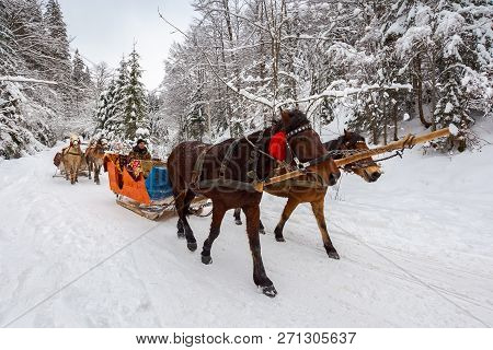 National Nature Park Synevir, Ukraine - Feb 11, 2018: Winter Ride In Horse Sleigh. Winter Holidays F