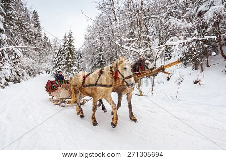 National Nature Park Synevir, Ukraine - Feb 11, 2018: Winter Ride In Horse Sleigh.