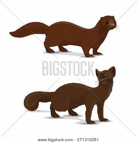 Mink And Sable Dark-colored Carnivorous Mammal Icon. Wildlife Vector Animal With Rich Glossy Brown C