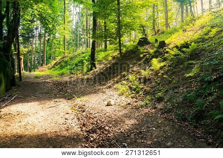 Country Road Through Forest In Sun Light. Lovely Transportation Background