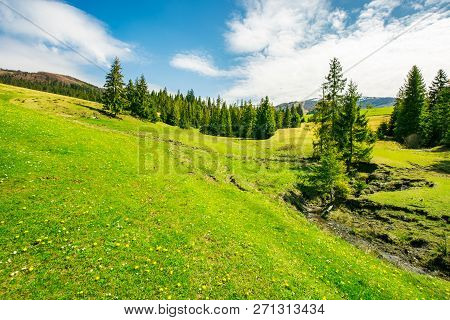 Wonderful Springtime Weather In Mountains. Spruce Trees On A Grassy Meadow. Small Brook Winding Down