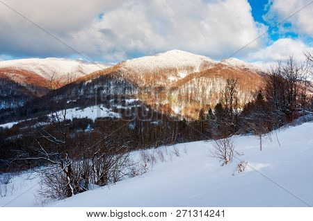 Slope And The Forested Mountain With Snowy Top. Sunny In Winter Landscape