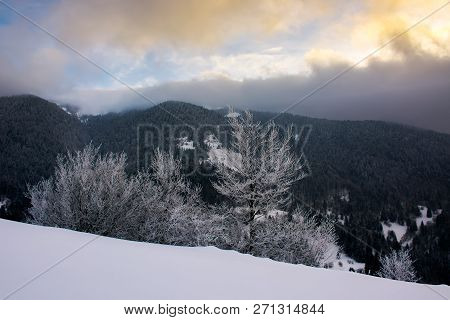 Trees In Hoarfrost On A Snowy Slope At Sunrise. Wonderful Winter Landscape With Cloudy Sky Above The