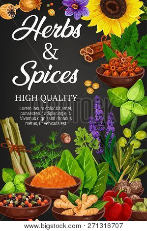 Seasoning Herbs And Spices, Vector Condiments. Rosemary And Thyme, Basil, Dill And Parsley, Sunflowe