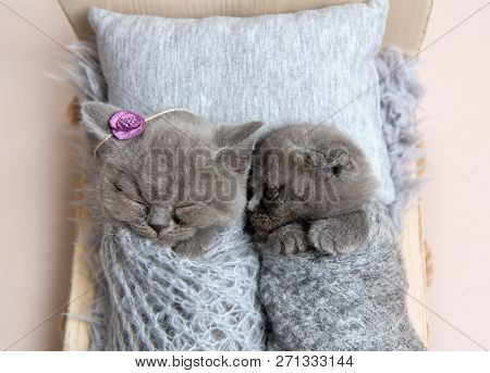 Little gray kittens sleeping in small bed covered with blanket