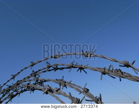 Coil Of Barbed Wire