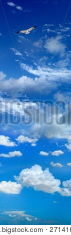 Single flying seagull over sunny and cloudy sky