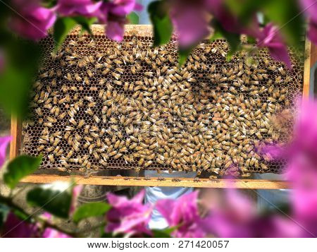 Close up group of honeybees on honeycomb in sunny garden