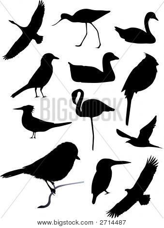 Twelve Bird Silhouettes (Replacing: 2660264)