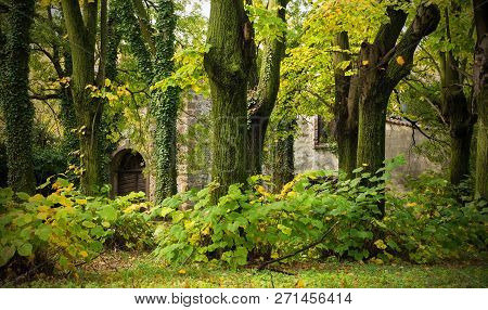 Autumnal Trees In Front Of An Old Disused Building In Friuli Venezia Giulia, North East Italy