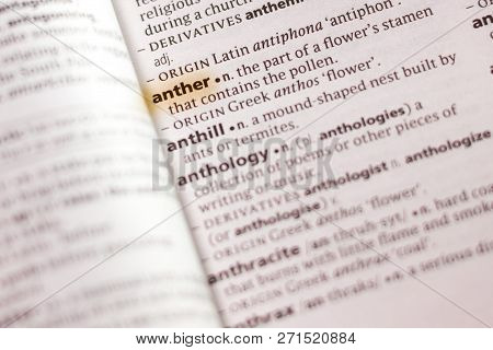 The Word Or Phrase Anther In A Dictionary Highlighted With Marker.