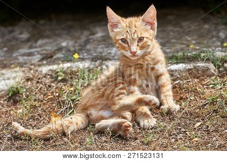 Young Curious Cat Sits By The Wayside