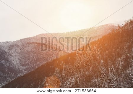 Slopes Of The Mountains With Dense Snow-covered Coniferous Forest. Winter Landscape