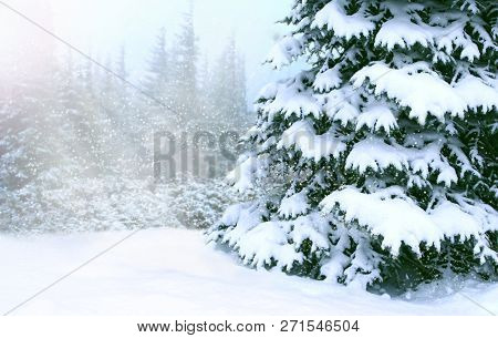 Sunny Rays Among Conifers In Winter Forest. Beautiful Landscape With Winter Wood