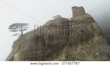 Green Tree On Edge Of Cliff In Fog. Shot. Stone Pillar On Rock Immersed In Dense Fog. Mystical Atmos
