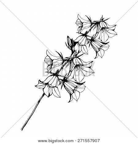 Flower Bel Illustration. Hand Drawn Ink Illustration. Wallpaper Or Fabric Design. Stylish Illustrati