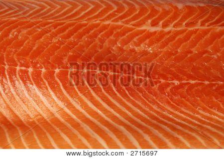 Fresh Salmon Background