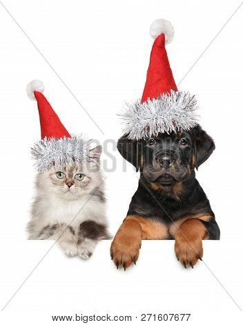 Best Friends. Puppy And Kitten In Santa Red Hat Above Banner, Isolated On White Background