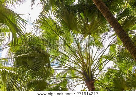 Green Tropic Exotic Palm Tree Leaves In Front Of Sky