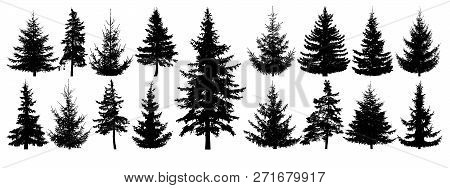 Forest Trees Set. Isolated Vector Silhouette. Coniferous Forest. Christmas Tree, Fir-tree, Pine, Pin