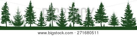 Seamless Forest Fir Trees Silhouette. Parkland, Park, Garden. Isolated, Separate Objects. Coniferous