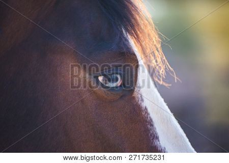 Close Up Portrait Of An Adult Horse With Brown And White Fur And Blue, White, And Brown Eyes.