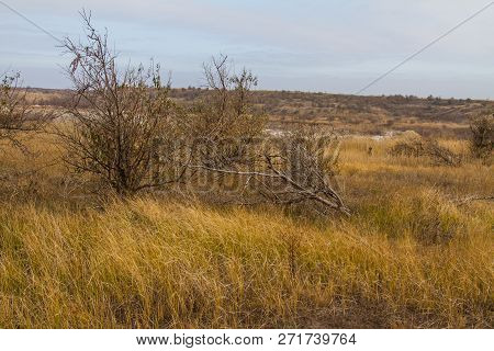 The Barbarous Destruction Of Shelter Forests In The Ukrainian Steppe. Zaporozhye Region, Ukraine. No