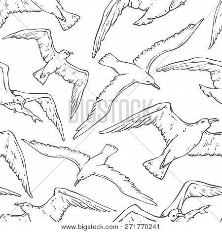 Vector Seamless Pattern Flying Seagulls. Bird Gull Angler Black White Monochrome Outline Sketch Illu