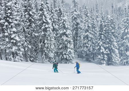 Freeriders Skiers Group Skitur Uphill In Snow In Winter Forest