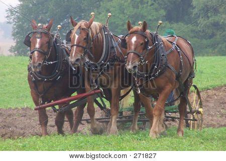 Three Horse Team