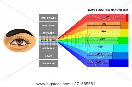 Visible Light Spectrum. Color Waves Length Perceived By Human Eye. Rainbow Electromagnetic Waves. Ed