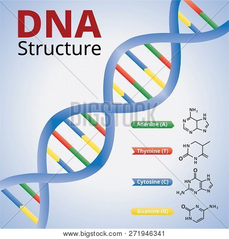 Spiral Of Dna, An Illustration Of The Structure Of The Dna Molecules, Illustration Vector