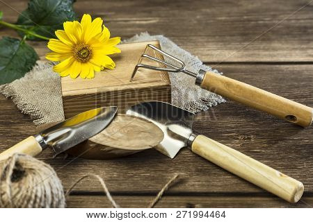 Gardening. Hobby. Planting And Transplanting Plants. Yellow Garden Flower, Twine For Decor And Garde