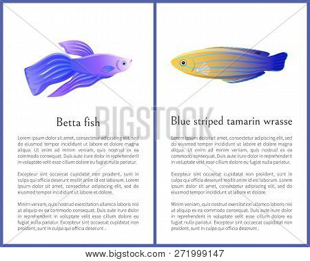 Betta Fish And Blue Striped Tamarin Wrasse Icons. Freshwater Aquarium Pets Silhouette Icon On Blank